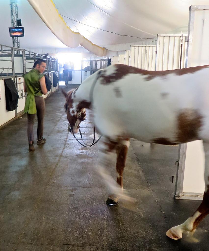 Cavalia stable Calgary