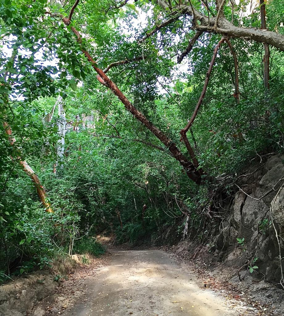 Sayulita road
