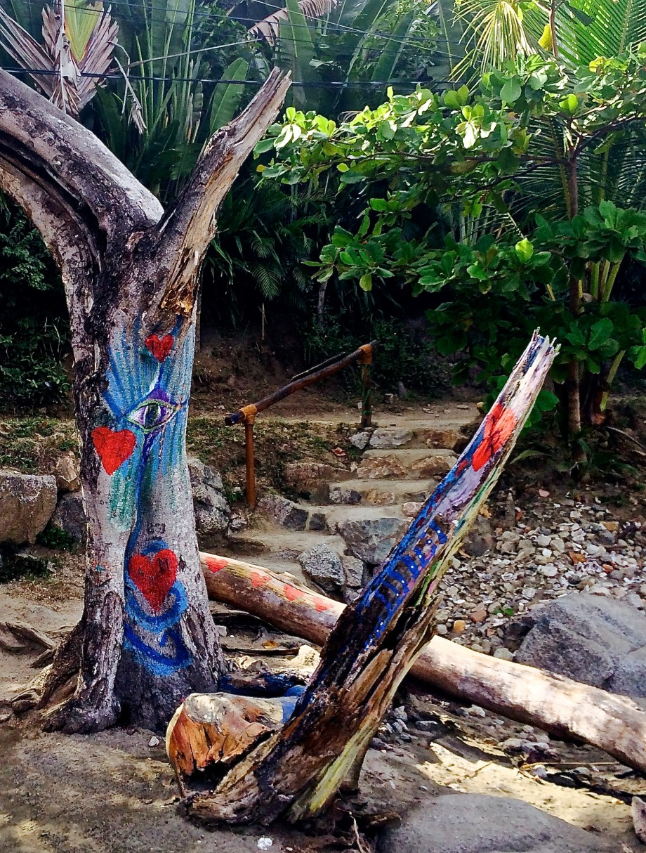 Corazon tree, Sayulita Beach