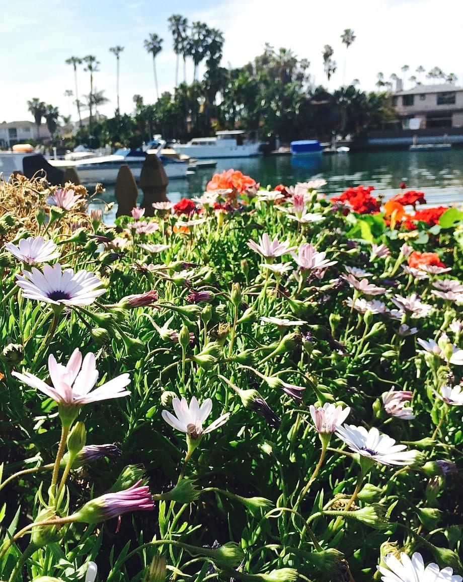 Balboa, Newport, CA