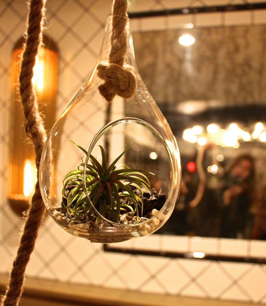 Bluegrass Nursery hanging terrarium airplant