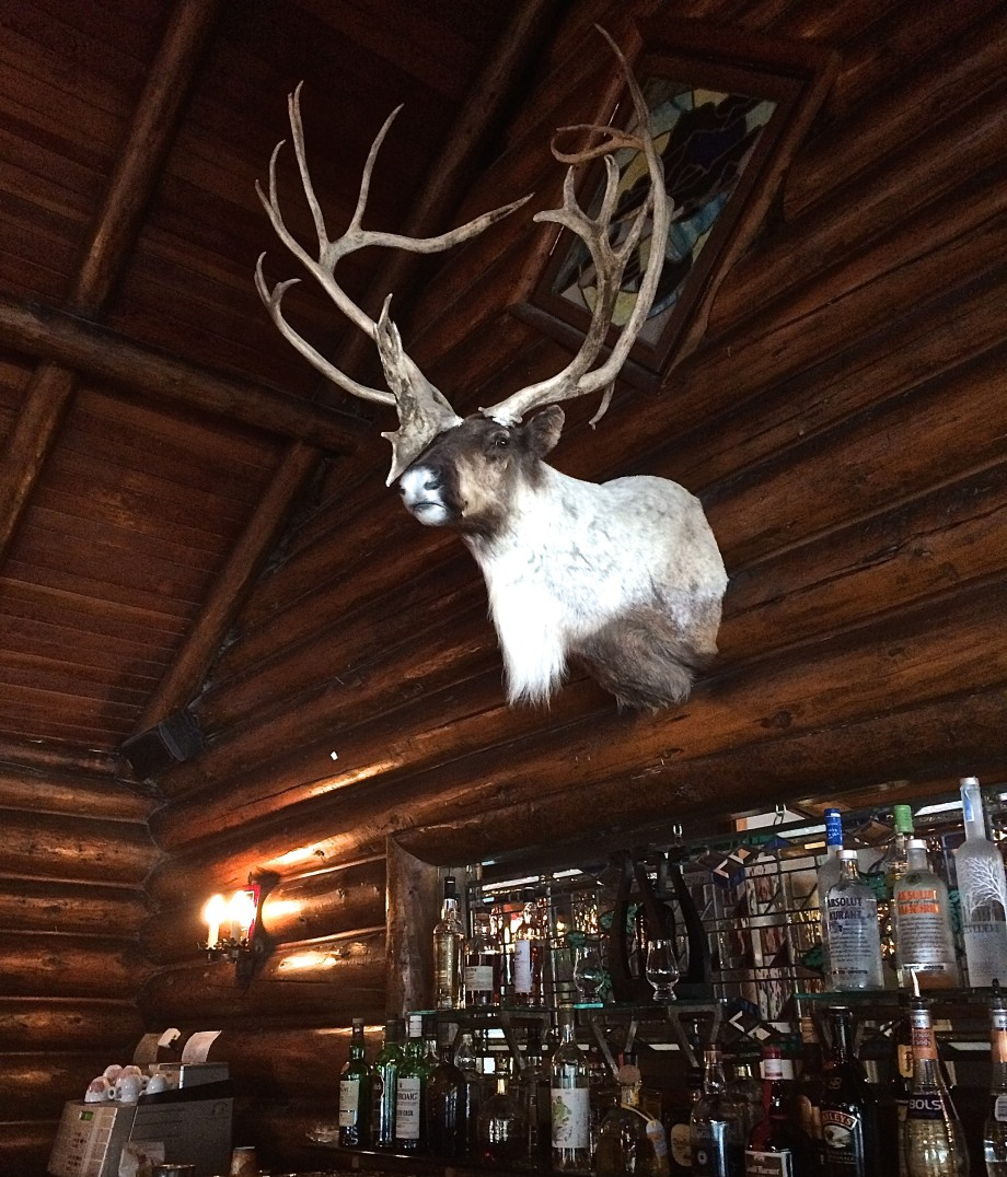 Caribou at Deer Lodge in Lake Louise