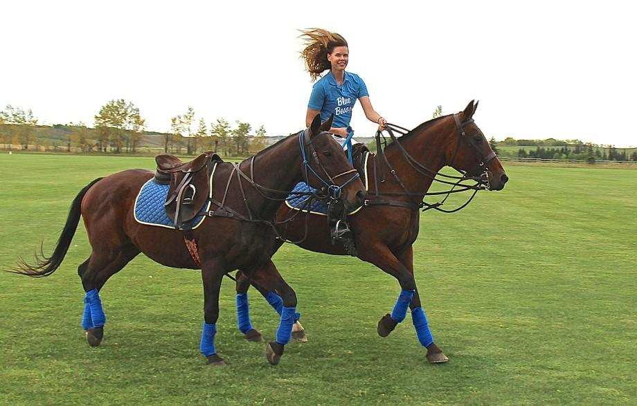 ponying polo horses
