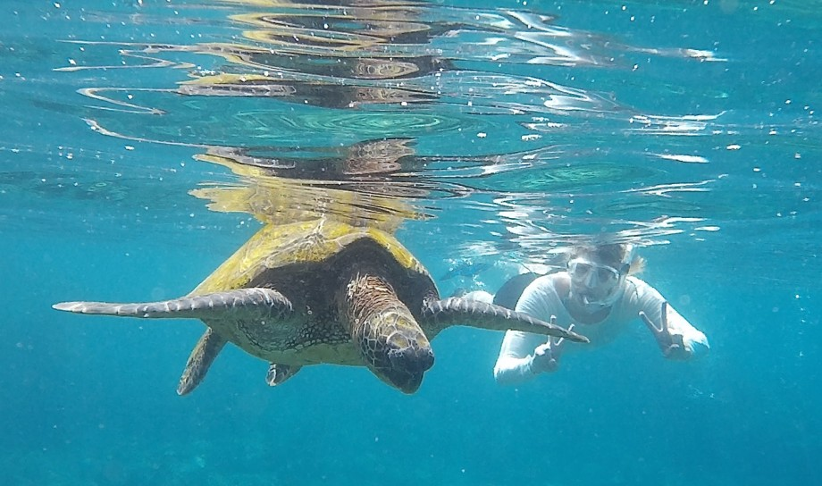 Swimming with turtles, Maui